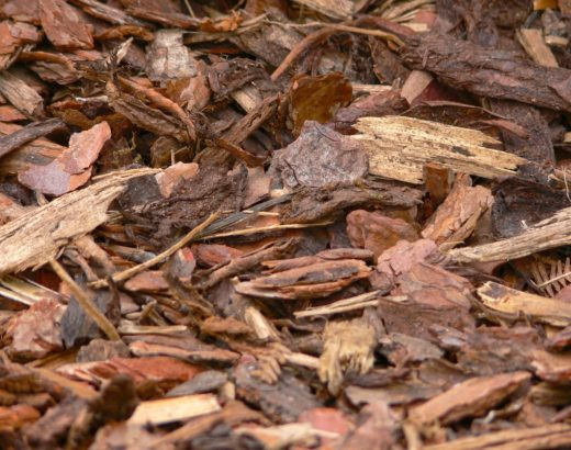 Pine Bark Mulch For Tomatoes