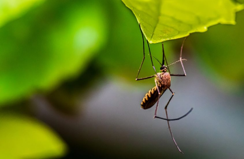 Are Mosquito Coils Poisonous?